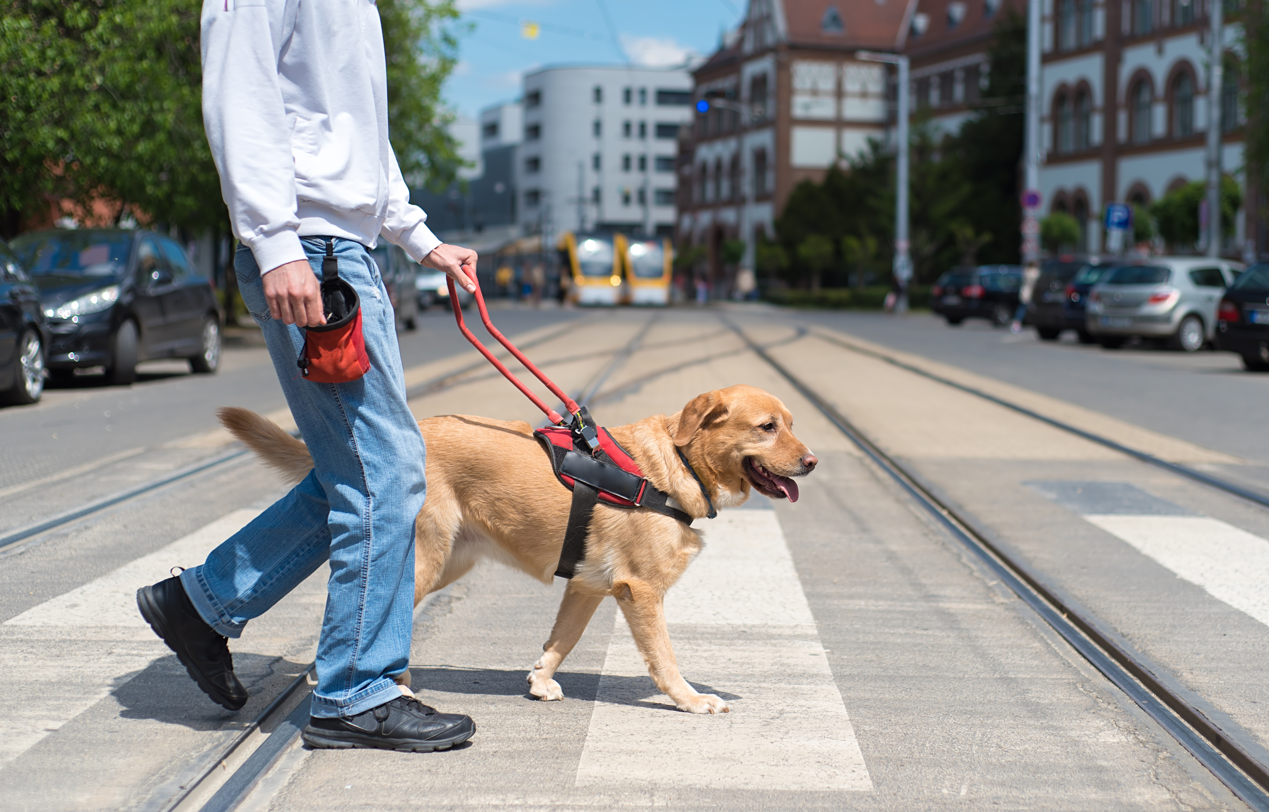 All About the Rights of Service Dogs & Emotional Support Animals in HOAs