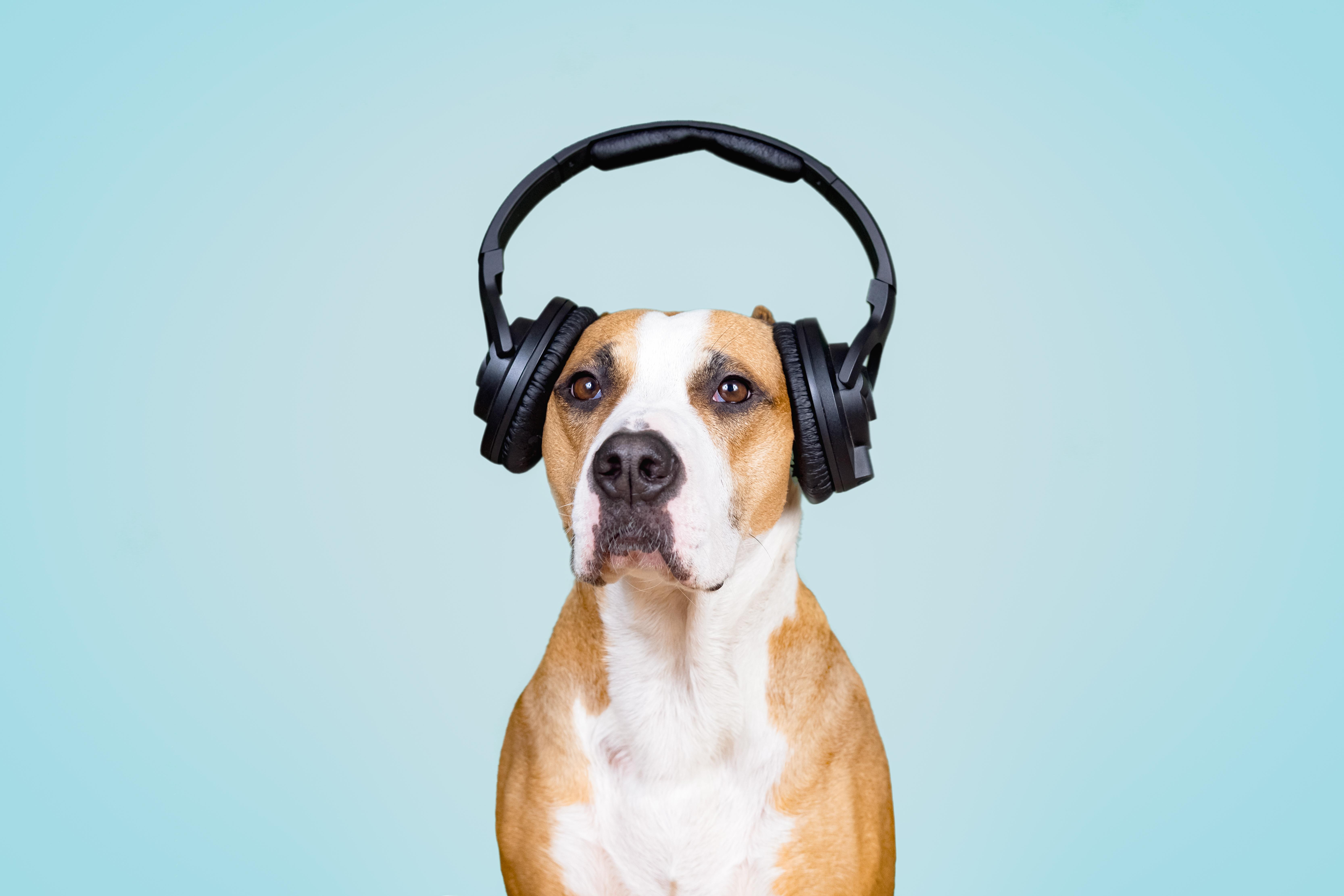 3 Steps to Handling Noise Complaints Between Neighbors