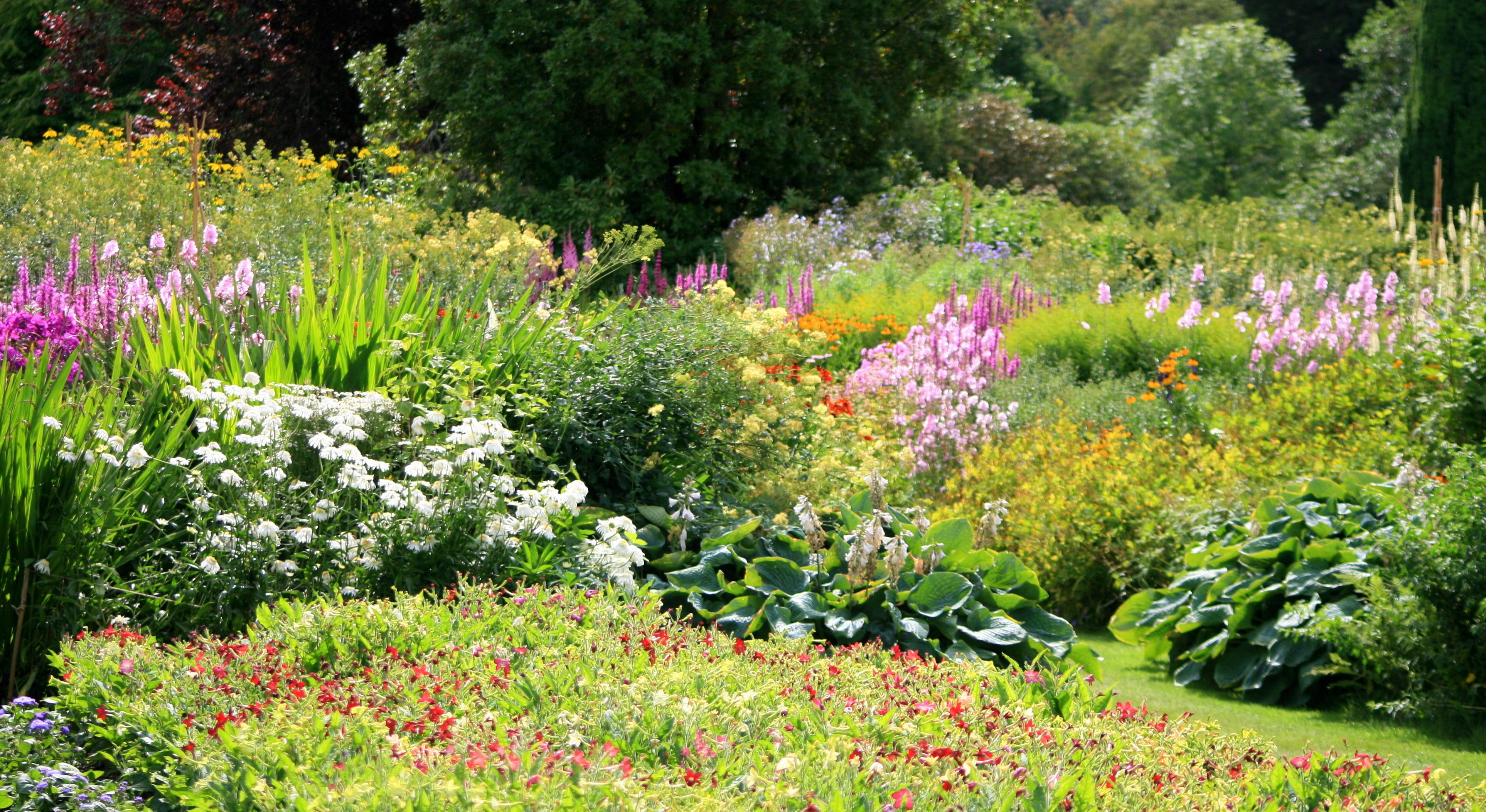 5 Hardy Summer Plants for Common Areas